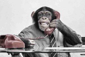 Monkey индекс